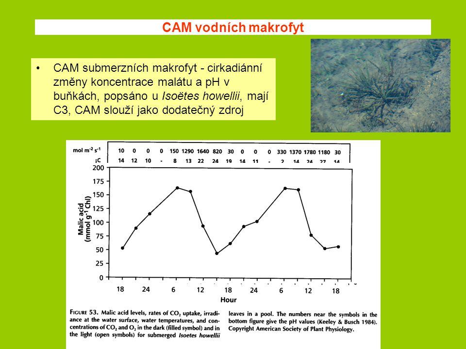 CAM vodních makrofyt CAM submerzních makrofyt - cirkadiánní změny koncentrace malátu a pH v buňkách, popsáno u Isoëtes howellii, mají C3, CAM slouží j