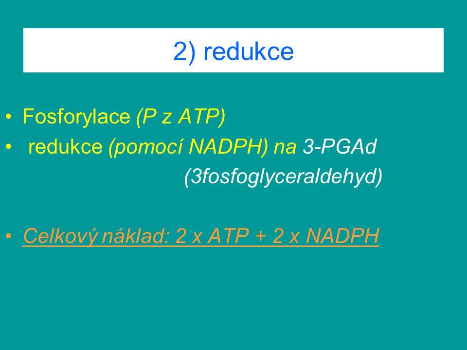 2) redukce Fosforylace (P z ATP) redukce (pomocí NADPH) na 3-PGAd (3fosfoglyceraldehyd) Celkový náklad: 2 x ATP + 2 x NADPH