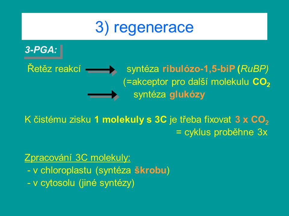 3) regenerace Řetěz reakcí syntéza ribulózo-1,5-biP (RuBP) (=akceptor pro další molekulu CO 2 syntéza glukózy K čistému zisku 1 molekuly s 3C je třeba