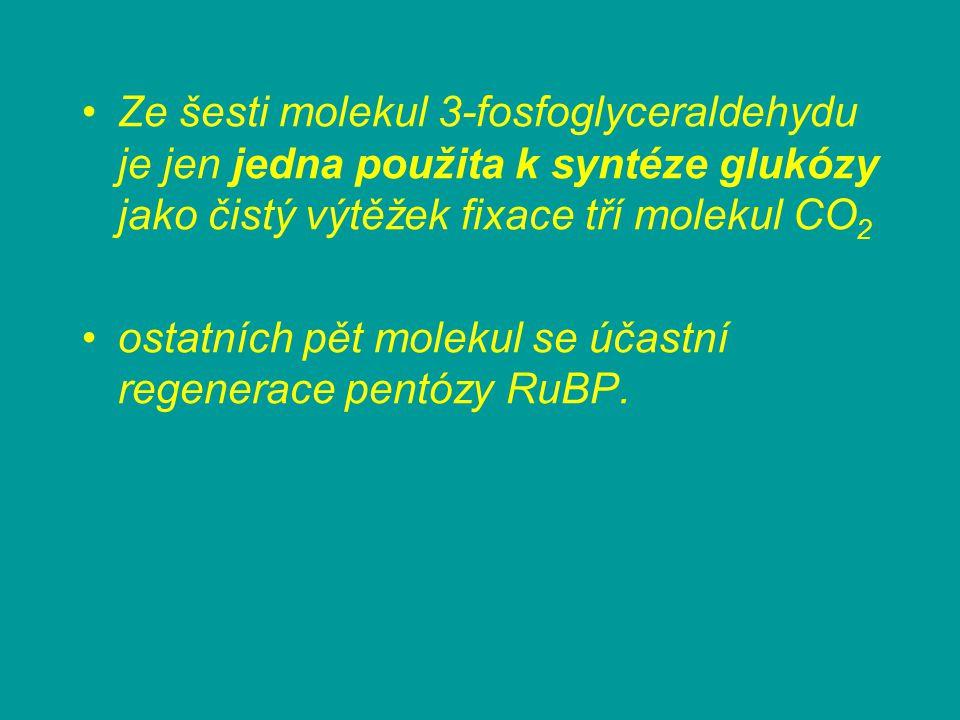 Ze šesti molekul 3-fosfoglyceraldehydu je jen jedna použita k syntéze glukózy jako čistý výtěžek fixace tří molekul CO 2 ostatních pět molekul se účas