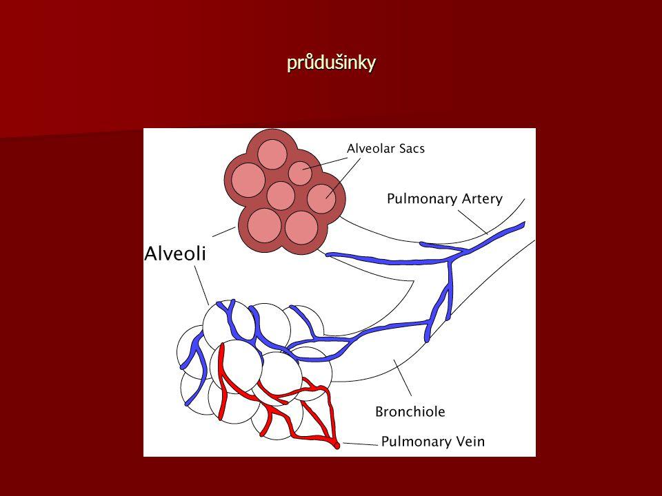 Plíce jsou párový orgán, uložený v dutině hrudní, jsou párový orgán, uložený v dutině hrudní, vazivovou mezihrudní přepážkou jsou rozděleny na pravou a levou plíci, vazivovou mezihrudní přepážkou jsou rozděleny na pravou a levou plíci, v mezihrudní přepážce je uložen osrdečník se srdcem vychýleným k levé straně, v mezihrudní přepážce je uložen osrdečník se srdcem vychýleným k levé straně, levá plíce je menší, tvořena dvěma laloky, pravá je větší, tvořena třemi laloky, levá plíce je menší, tvořena dvěma laloky, pravá je větší, tvořena třemi laloky, povrch plic kryje vazivová blána – poplicnice přecházející na vnitřní stranu hrudníku jako pohrudnice, povrch plic kryje vazivová blána – poplicnice přecházející na vnitřní stranu hrudníku jako pohrudnice, mezi oběma blánami je štěrbina pohrudniční, vyplněná vazkou tekutinou, umožňující klouzání blan při dýchání, mezi oběma blánami je štěrbina pohrudniční, vyplněná vazkou tekutinou, umožňující klouzání blan při dýchání, průdušinky se větví v tenkostěnné alveolární chodbičky, otvírající se do plicních sklípků, průdušinky se větví v tenkostěnné alveolární chodbičky, otvírající se do plicních sklípků, stěna sklípků je tvořena jednovrstevným epitelem, ve stěnách sklípků probíhá výměna plynů.