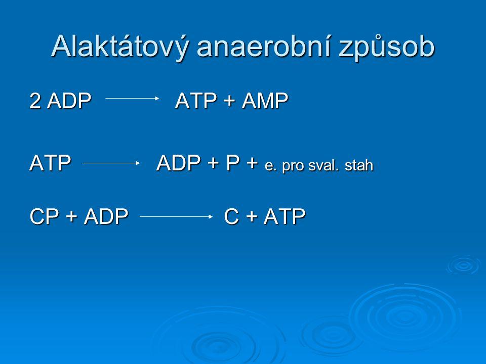 Alaktátový anaerobní způsob 2 ADPATP + AMP ATP ADP + P + e. pro sval. stah CP + ADP C + ATP