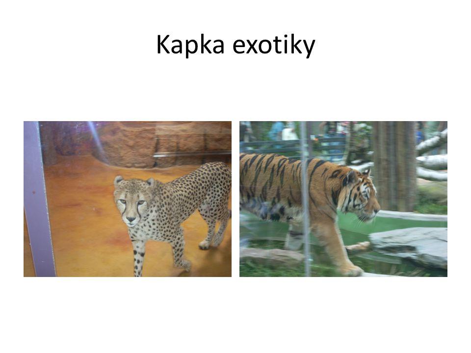 Kapka exotiky