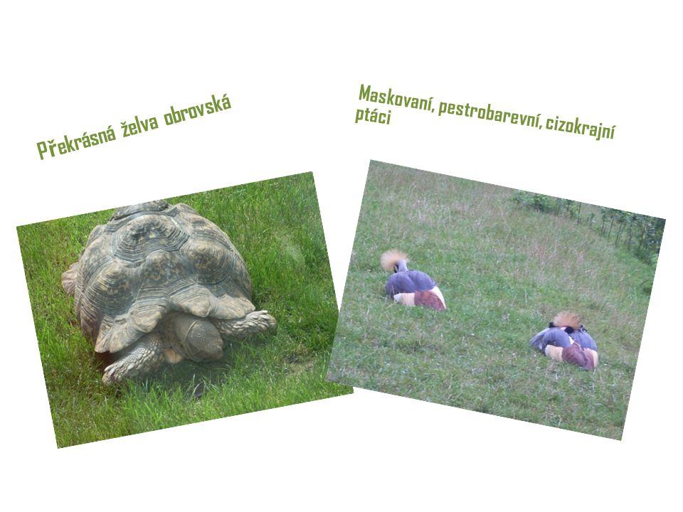 P ř ekrásná želva obrovská Maskovaní, pestrobarevní, cizokrajní ptáci
