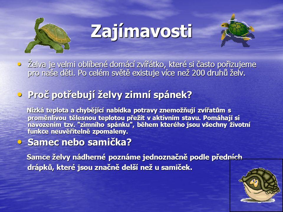 Zajímavosti Želva je velmi oblíbené domácí zvířátko, které si často pořizujeme pro naše děti.