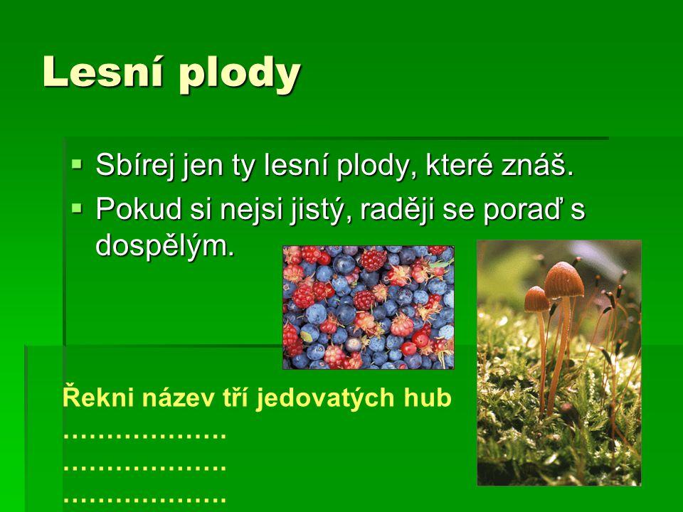 Lesní plody  Sbírej jen ty lesní plody, které znáš.  Pokud si nejsi jistý, raději se poraď s dospělým. Řekni název tří jedovatých hub ……………….