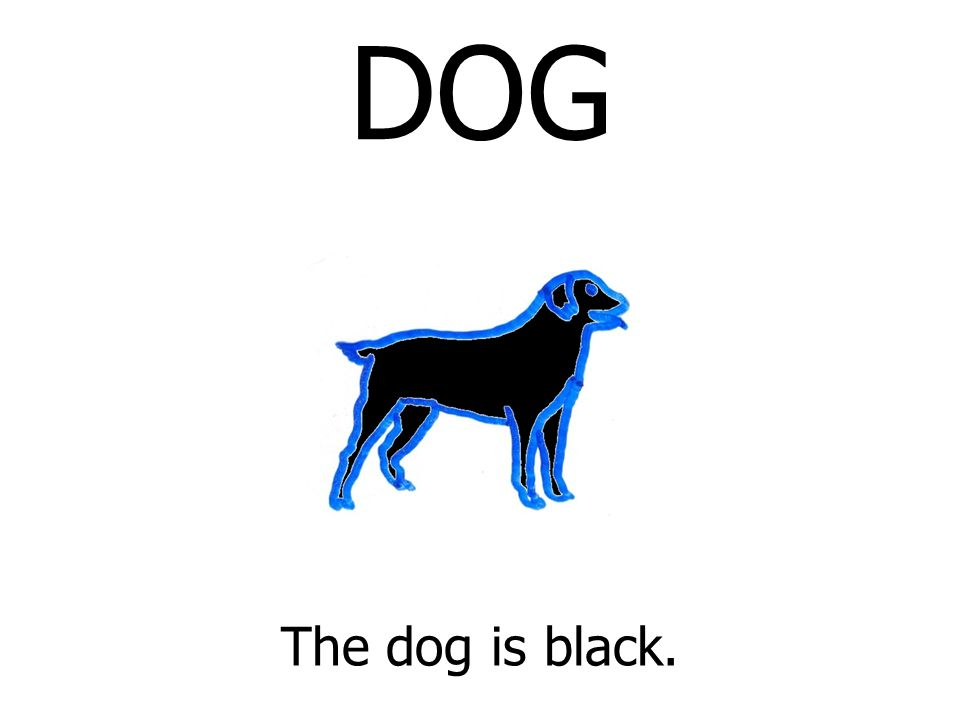 DOG The dog is black.