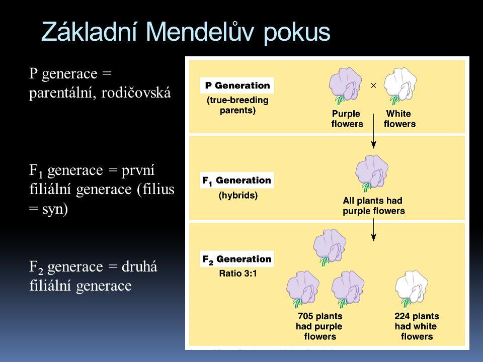 Základní Mendelův pokus P generace = parentální, rodičovská F 1 generace = první filiální generace (filius = syn) F 2 generace = druhá filiální genera