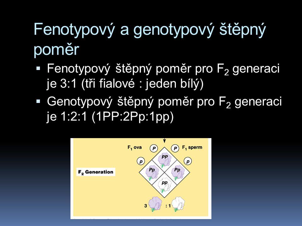 Fenotypový a genotypový štěpný poměr  Fenotypový štěpný poměr pro F 2 generaci je 3:1 (tři fialové : jeden bílý)  Genotypový štěpný poměr pro F 2 ge