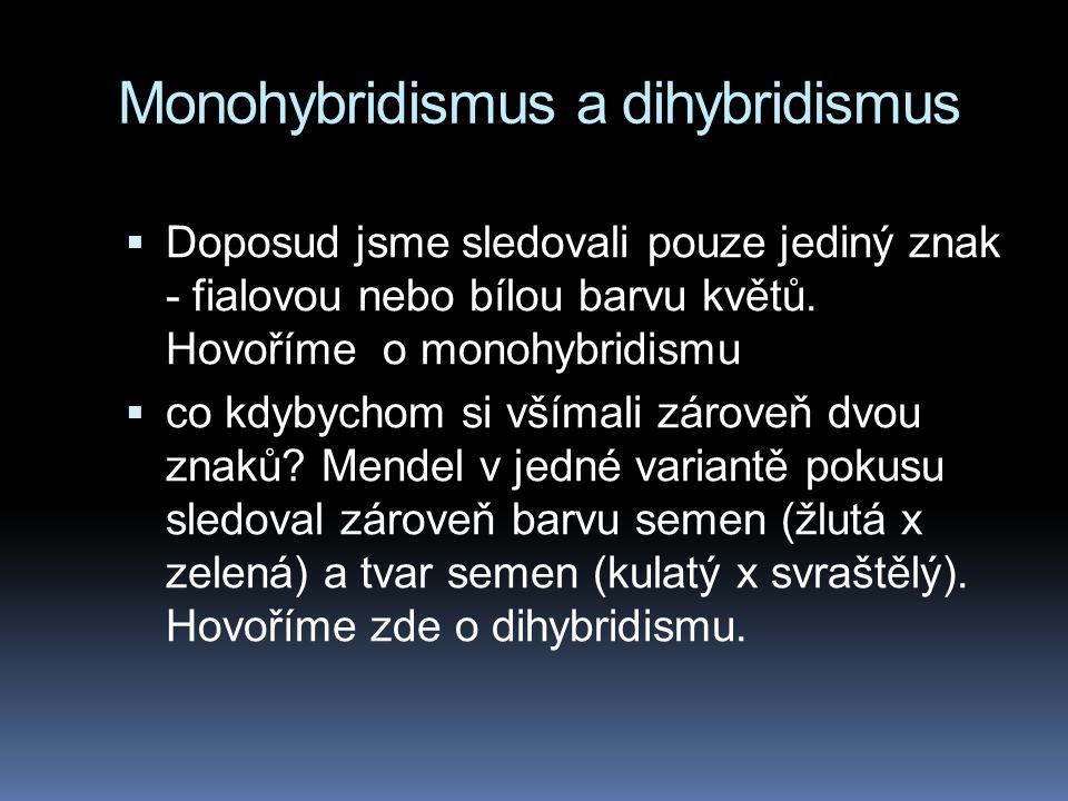 Monohybridismus a dihybridismus  Doposud jsme sledovali pouze jediný znak - fialovou nebo bílou barvu květů. Hovoříme o monohybridismu  co kdybychom