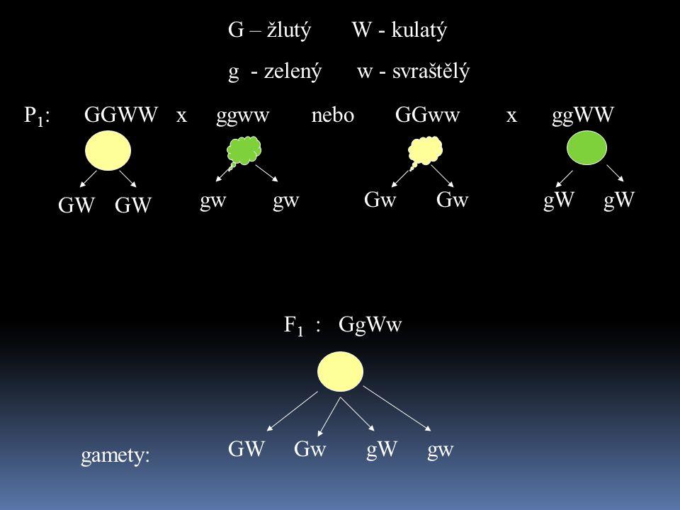 P 1 : GGWW x ggww nebo GGww x ggWW G – žlutý W - kulatý g - zelený w - svraštělý F 1 : GgWw GW gw Gw Gw gW gW GW Gw gW gw gamety: