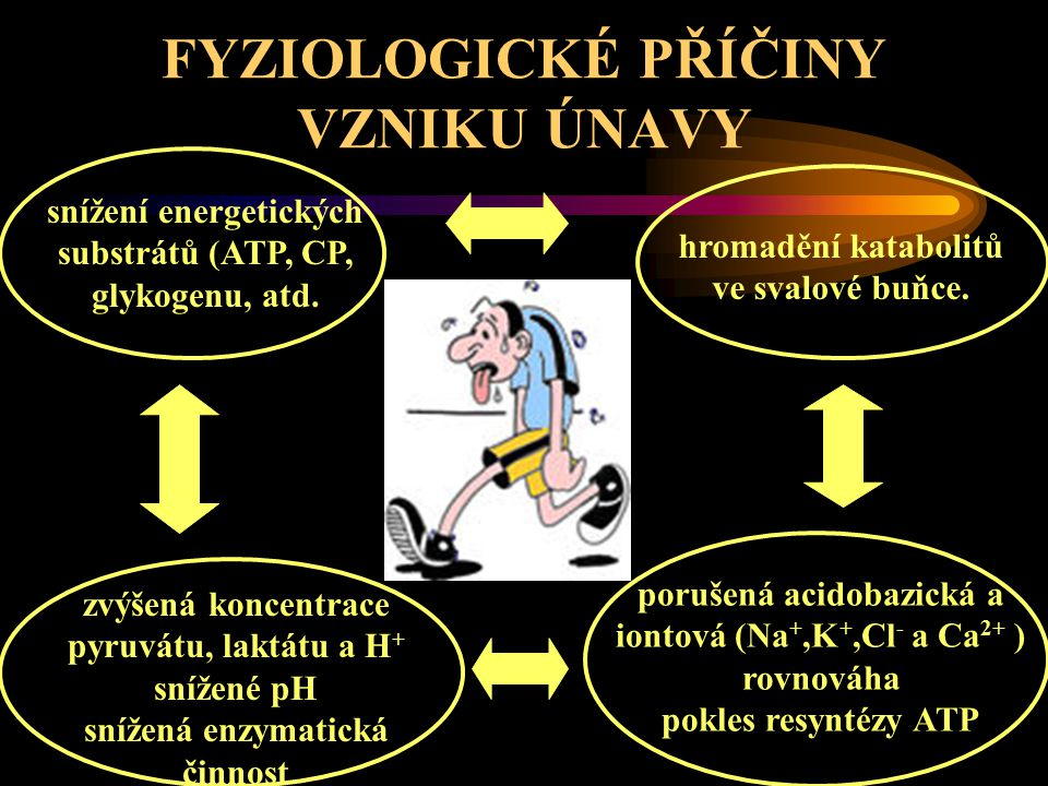 FYZIOLOGICKÉ PŘÍČINY VZNIKU ÚNAVY Obecně při únavě dochází v organismu k chemicko-fyzikálním změnám ( pH, pO 2, osmotického tlaku, viskozity, tělesné teploty, pCO 2 ), které negativně ovlivňují funkční systémy organismu.