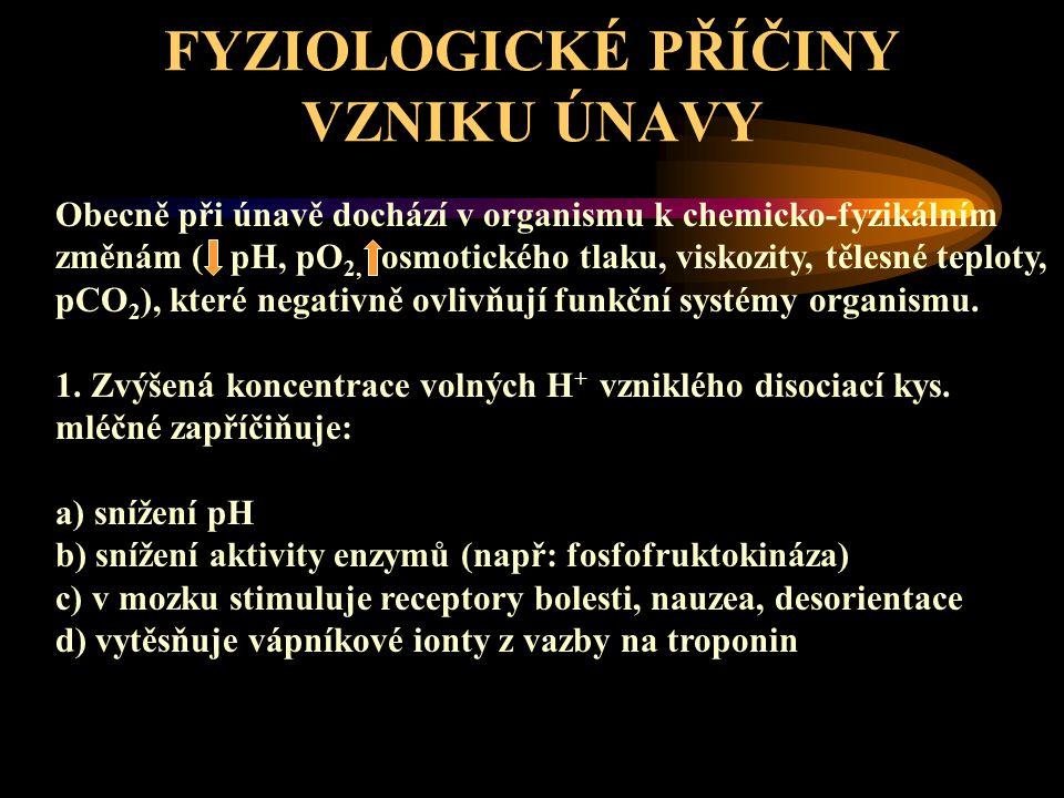 FYZIOLOGICKÉ PŘÍČINY VZNIKU ÚNAVY 2.