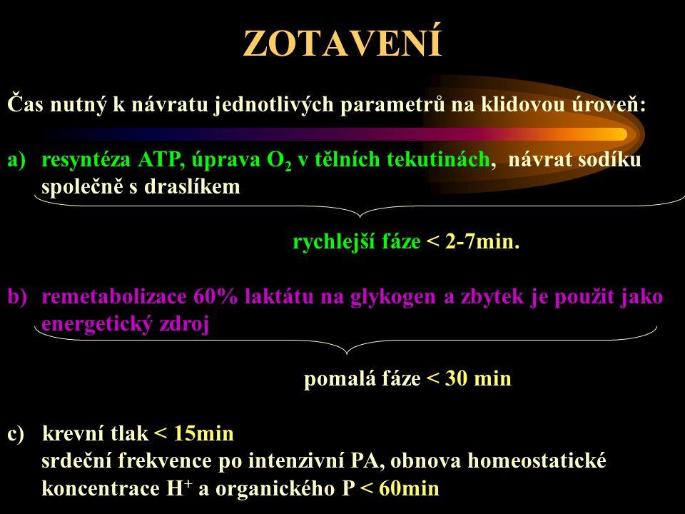 ZOTAVENÍ Doporučený čas pro zotavení po vyčerpávajícím cvičení (Upraveno dle Foxe, 1984) PROCES ZOTAVENÍ MINIMUMMAXIMUM Obnova ATP – CP ve svalu 2 minuty3-5 minut Náhrada alaktátového O 2 dluhu 3 minuty5 minut Náhrada O 2 - myoglobinu 1 minuta2 minuty Náhrada laktátového O 2 dluhu 30 minut60 minut Resyntéza zásob sval.