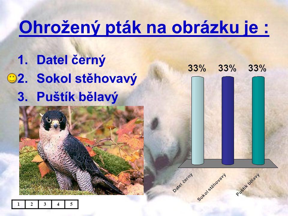 Ohrožený pták na obrázku je : 1.Datel černý 2.Sokol stěhovavý 3.Puštík bělavý 12345