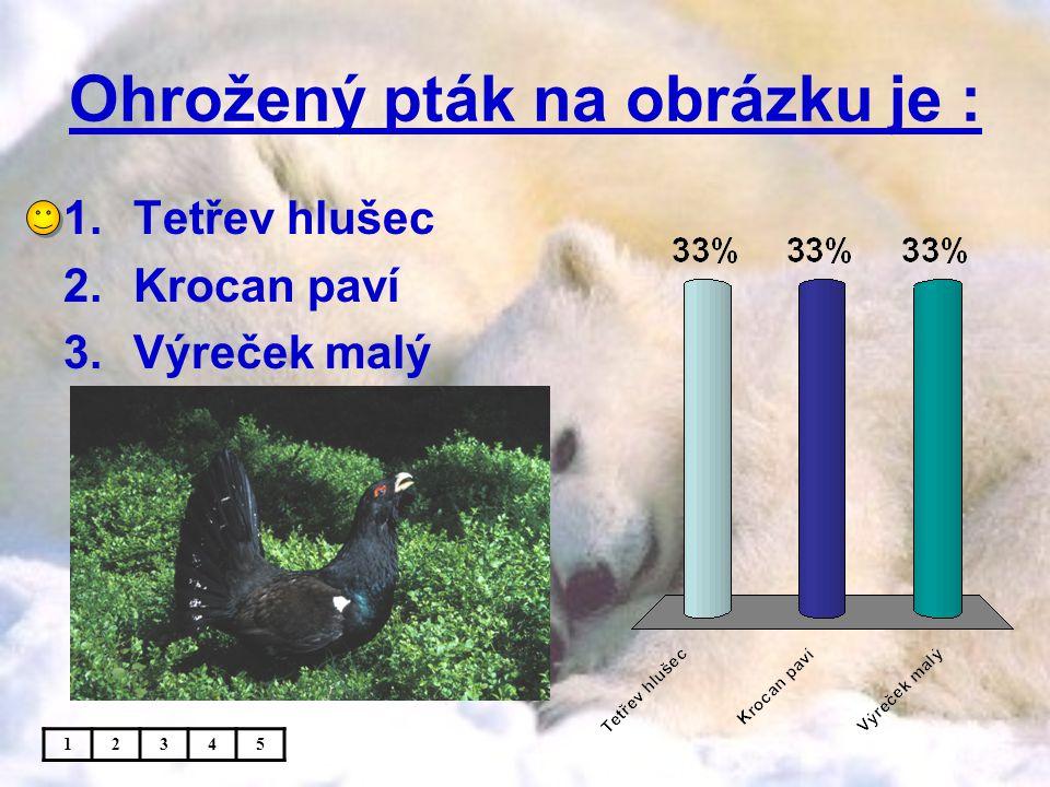 Ohrožený pták na obrázku je : 1.Tetřev hlušec 2.Krocan paví 3.Výreček malý 12345