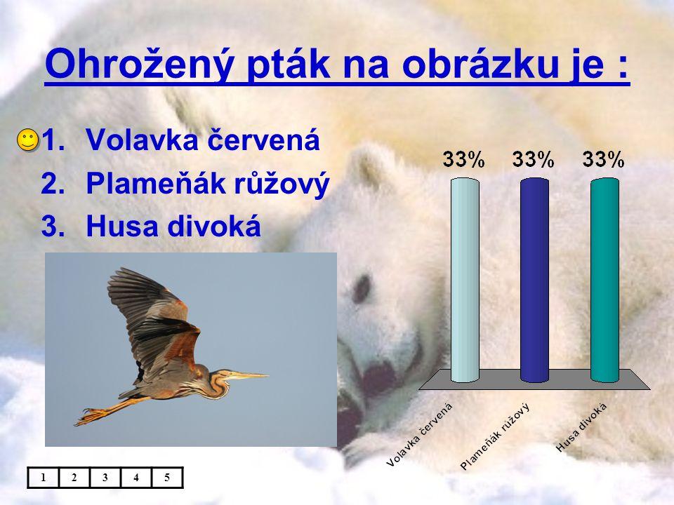 Ohrožený pták na obrázku je : 1.Volavka červená 2.Plameňák růžový 3.Husa divoká 12345