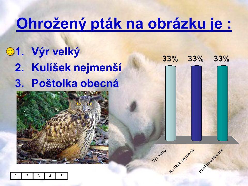Ohrožený pták na obrázku je : 1.Výr velký 2.Kulíšek nejmenší 3.Poštolka obecná 12345