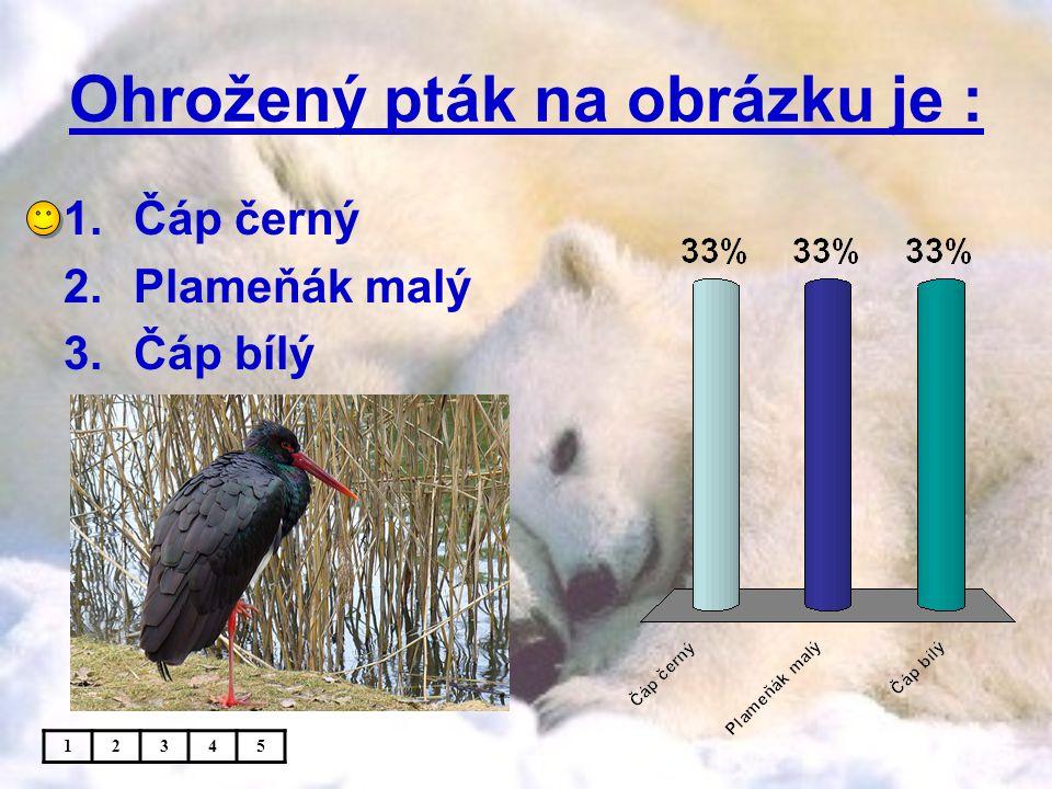 Ohrožený pták na obrázku je : 1.Čáp černý 2.Plameňák malý 3.Čáp bílý 12345