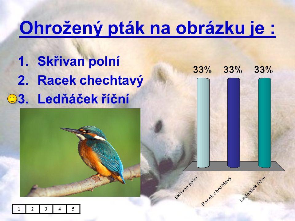 Ohrožený pták na obrázku je : 1.Skřivan polní 2.Racek chechtavý 3.Ledňáček říční 12345