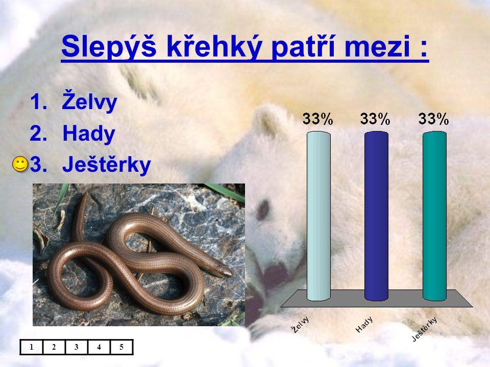 Slepýš křehký patří mezi : 1.Želvy 2.Hady 3.Ještěrky 12345