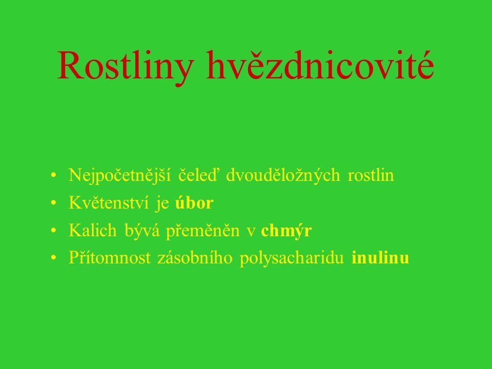 Jestřábník trsnatý (Hieracium caespitosum)