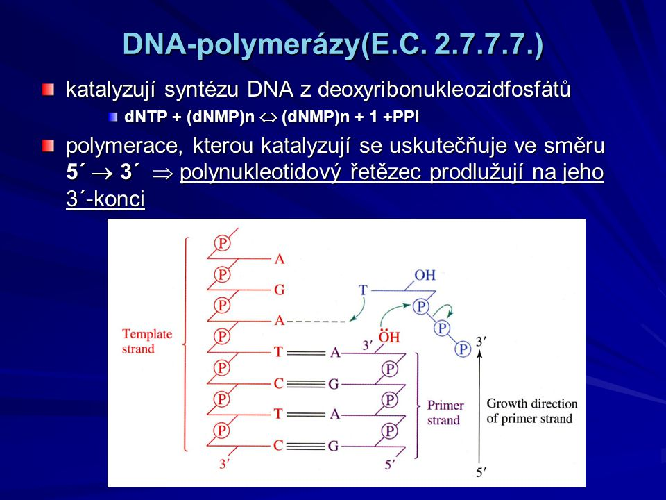 DNA-polymerázy(E.C.