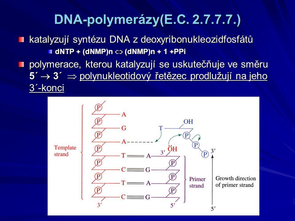 DNA-polymerázy(E.C. 2.7.7.7.) katalyzují syntézu DNA z deoxyribonukleozidfosfátů dNTP + (dNMP)n  (dNMP)n + 1 +PPi polymerace, kterou katalyzují se us