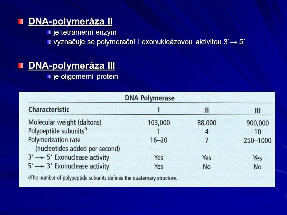 DNA-polymeráza II je tetramerní enzym vyznačuje se polymerační i exonukleázovou aktivitou 3´  5´ DNA-polymeráza III je oligomerní protein