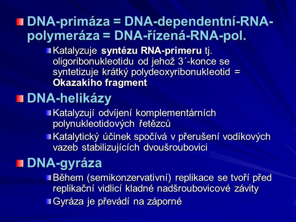 DNA-primáza = DNA-dependentní-RNA- polymeráza = DNA-řízená-RNA-pol. Katalyzuje syntézu RNA-primeru tj. oligoribonukleotidu od jehož 3´-konce se syntet