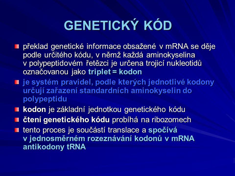 GENETICKÝ KÓD překlad genetické informace obsažené v mRNA se děje podle určitého kódu, v němž každá aminokyselina v polypeptidovém řetězci je určena trojicí nukleotidů označovanou jako triplet = kodon je systém pravidel, podle kterých jednotlivé kodony určují zařazení standardních aminokyselin do polypeptidu kodon je základní jednotkou genetického kódu čtení genetického kódu probíhá na ribozomech tento proces je součástí translace a spočívá v jednosměrném rozeznávání kodonů v mRNA antikodony tRNA