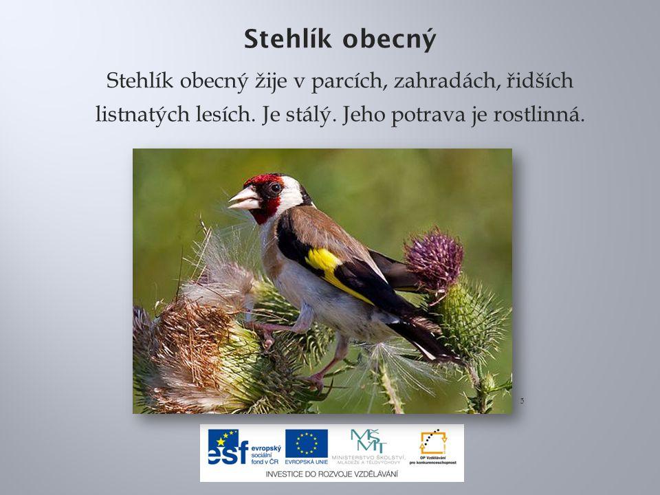 Stehlík obecný Stehlík obecný žije v parcích, zahradách, řidších listnatých lesích. Je stálý. Jeho potrava je rostlinná. 5