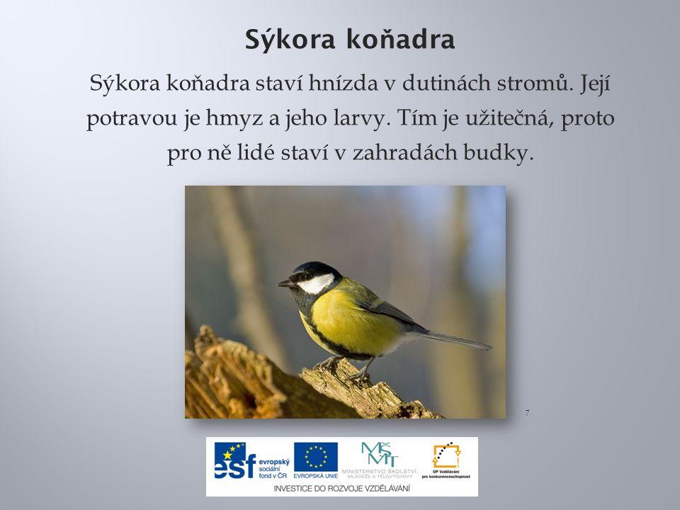 Sýkora ko ň adra Sýkora koňadra staví hnízda v dutinách stromů. Její potravou je hmyz a jeho larvy. Tím je užitečná, proto pro ně lidé staví v zahradá