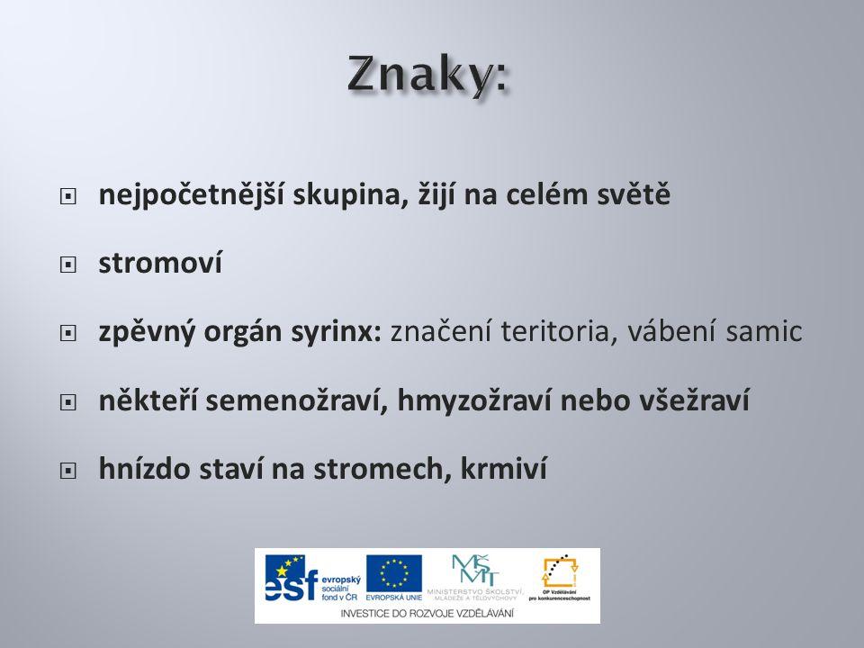 Vrána obecná šedá Vrána šedá žije na východě ČR.