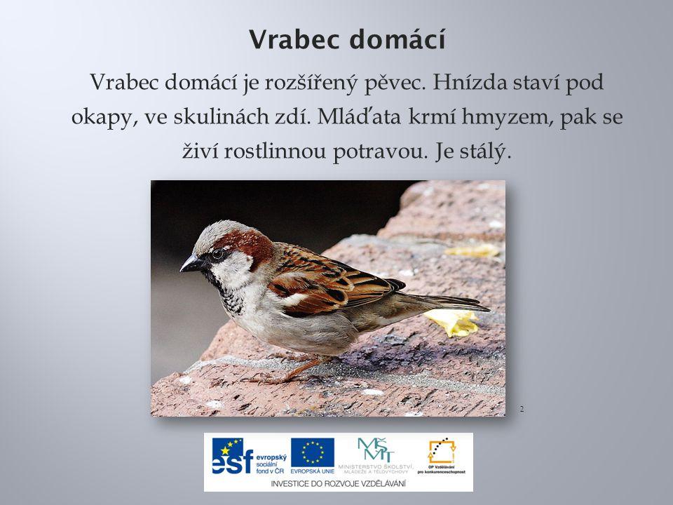 Vrabec domácí Vrabec domácí je rozšířený pěvec. Hnízda staví pod okapy, ve skulinách zdí. Mláďata krmí hmyzem, pak se živí rostlinnou potravou. Je stá