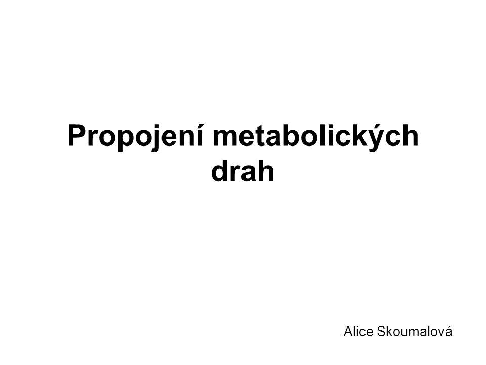 Propojení metabolických drah Alice Skoumalová