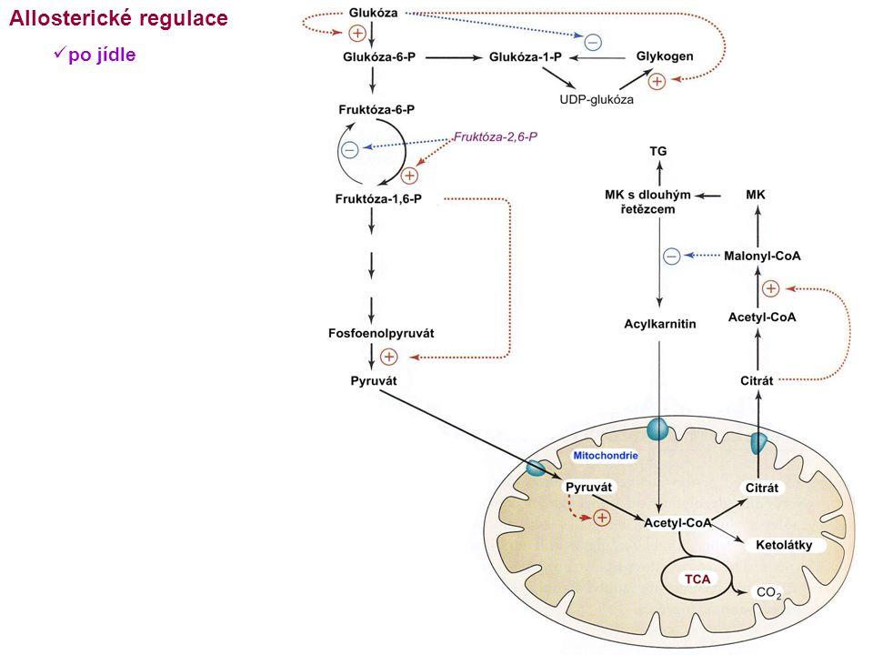 Allosterické regulace po jídle