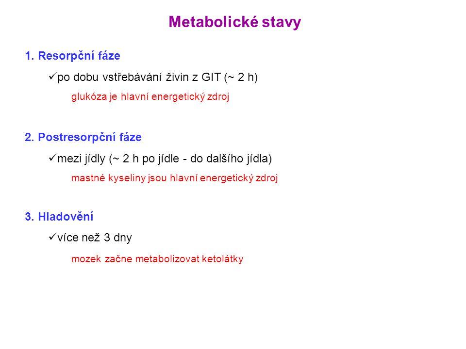 Metabolické stavy 1. Resorpční fáze po dobu vstřebávání živin z GIT (~ 2 h) glukóza je hlavní energetický zdroj 2. Postresorpční fáze mezi jídly (~ 2