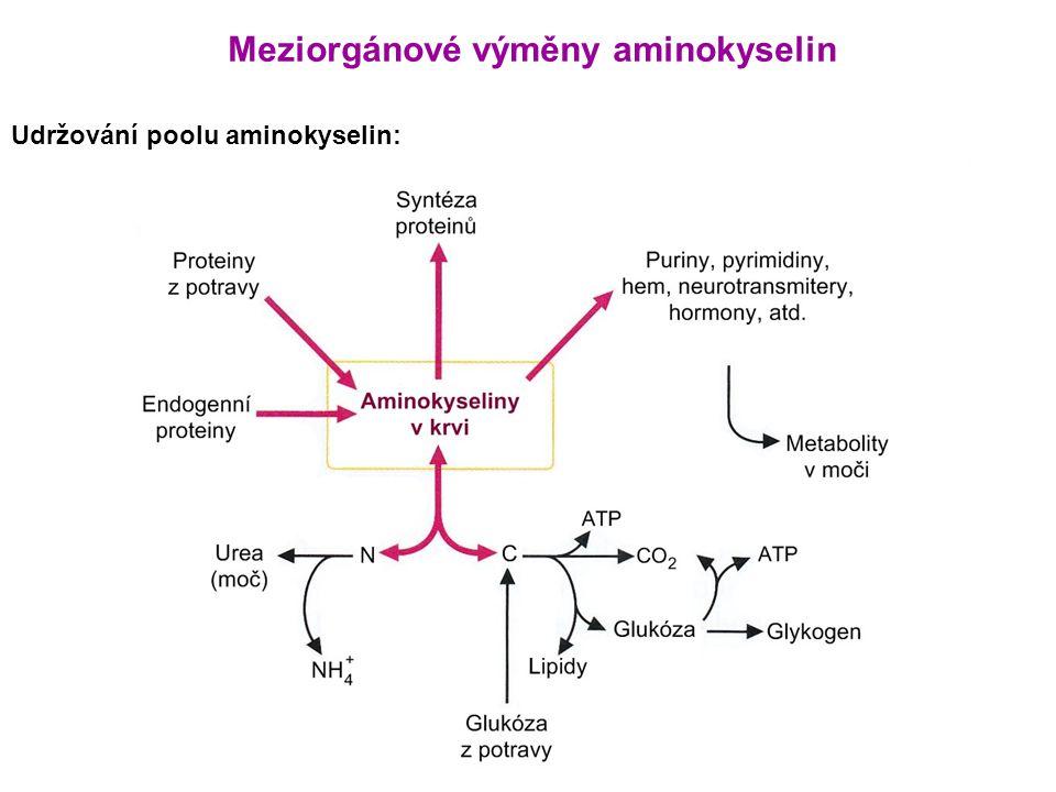 Udržování poolu aminokyselin: Meziorgánové výměny aminokyselin