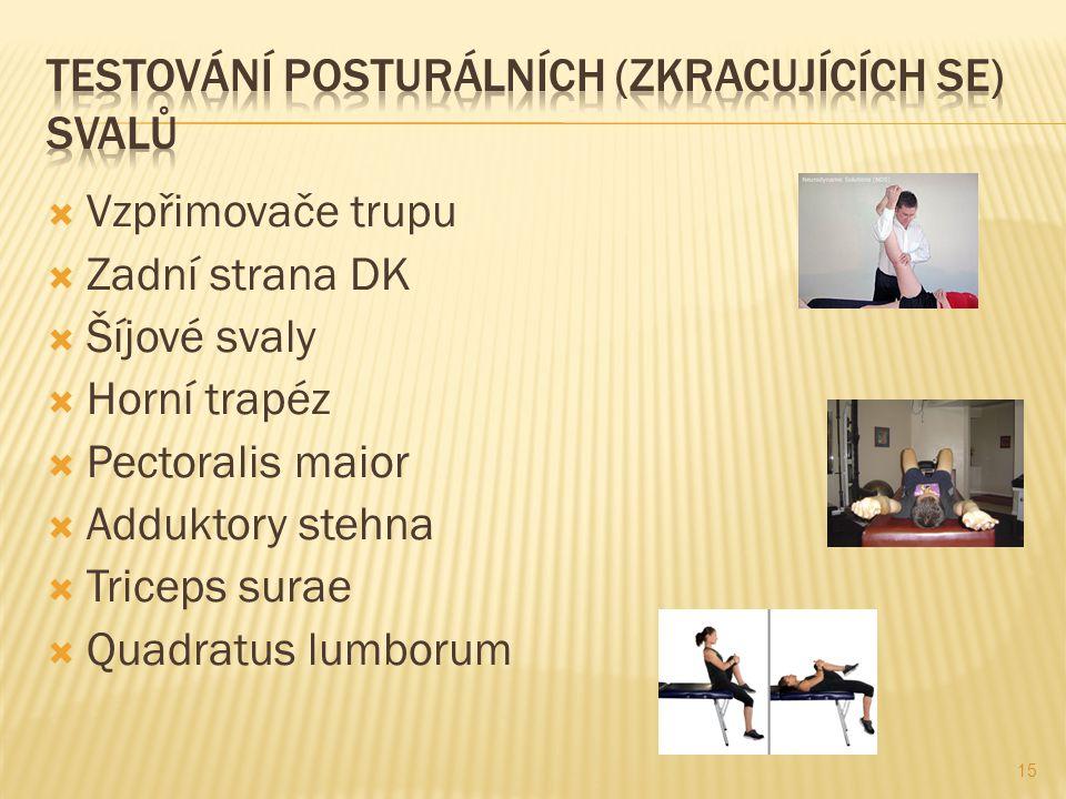  Vzpřimovače trupu  Zadní strana DK  Šíjové svaly  Horní trapéz  Pectoralis maior  Adduktory stehna  Triceps surae  Quadratus lumborum 15