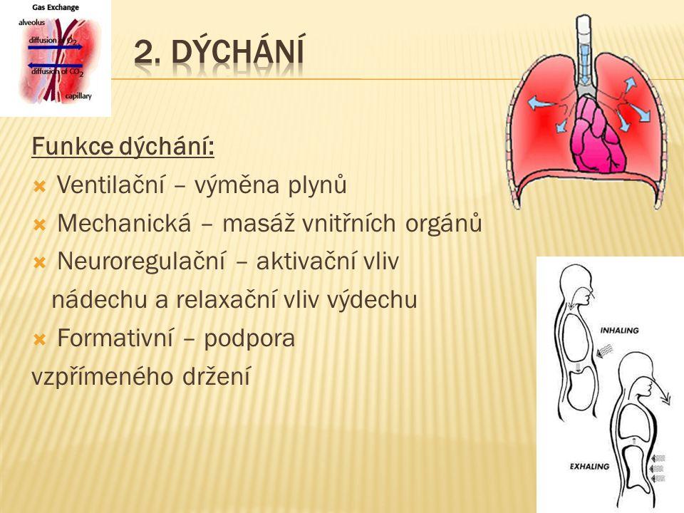 23 Funkce dýchání:  Ventilační – výměna plynů  Mechanická – masáž vnitřních orgánů  Neuroregulační – aktivační vliv nádechu a relaxační vliv výdechu  Formativní – podpora vzpřímeného držení