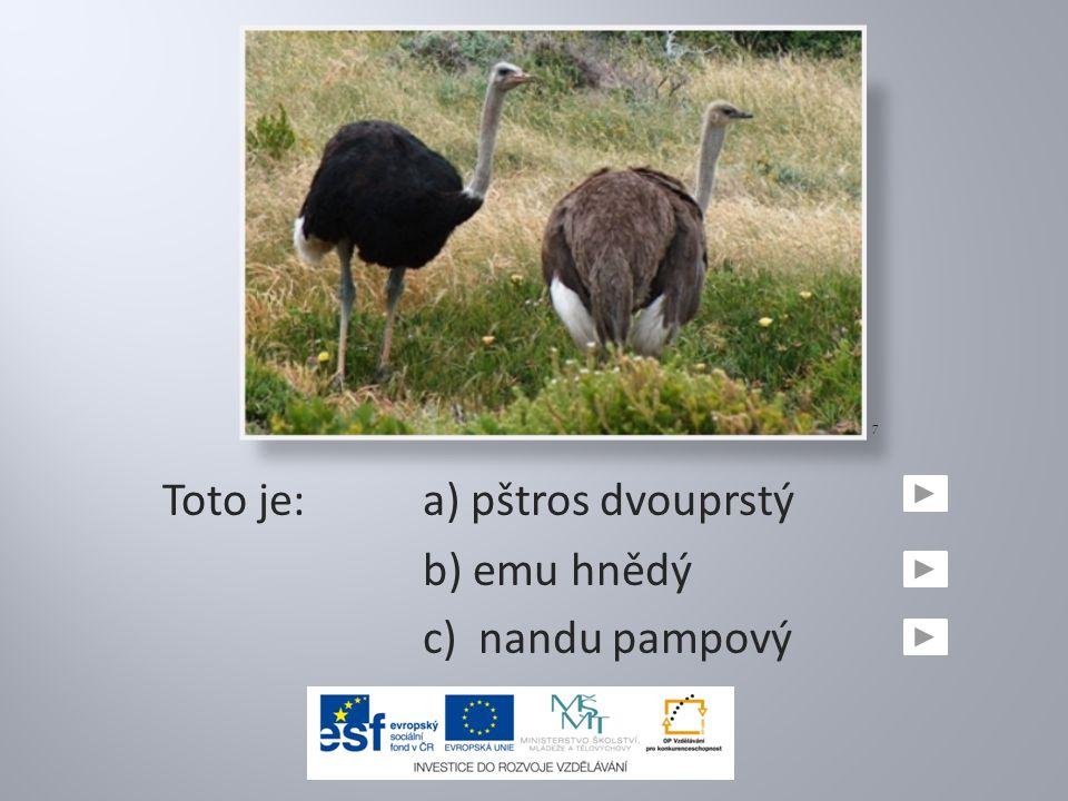Toto je:a) pštros dvouprstý b) emu hnědý c) nandu pampový 7