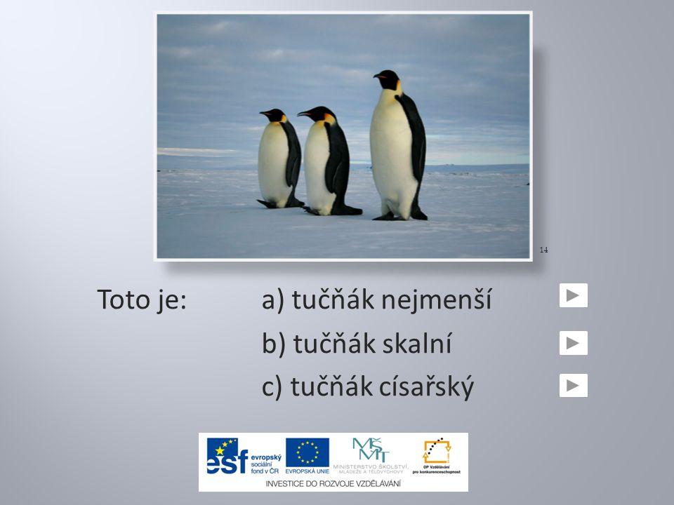 Toto je:a) tučňák nejmenší b) tučňák skalní c) tučňák císařský 14