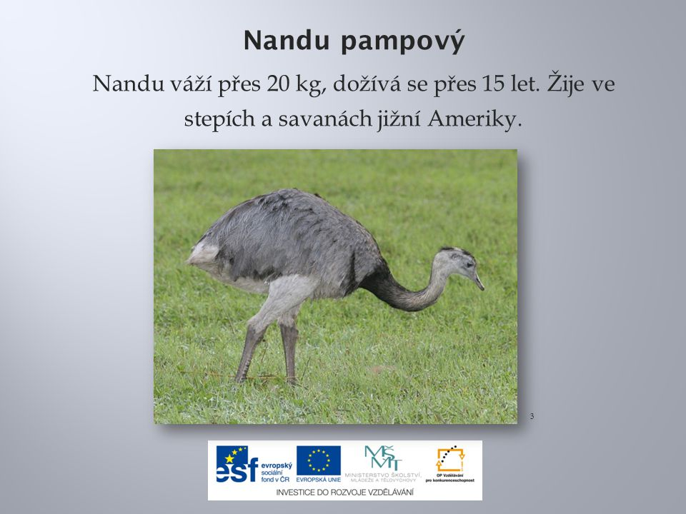 Nandu pampový Nandu váží přes 20 kg, dožívá se přes 15 let. Žije ve stepích a savanách jižní Ameriky. 3
