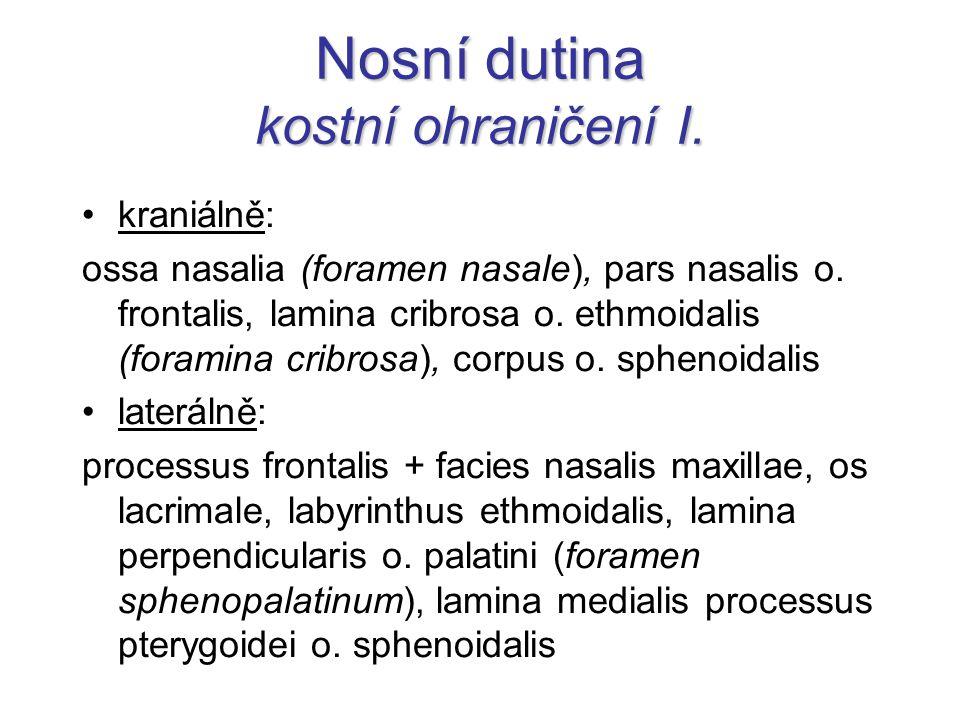 Nosní dutina kostní ohraničení I. kraniálně: ossa nasalia (foramen nasale), pars nasalis o. frontalis, lamina cribrosa o. ethmoidalis (foramina cribro