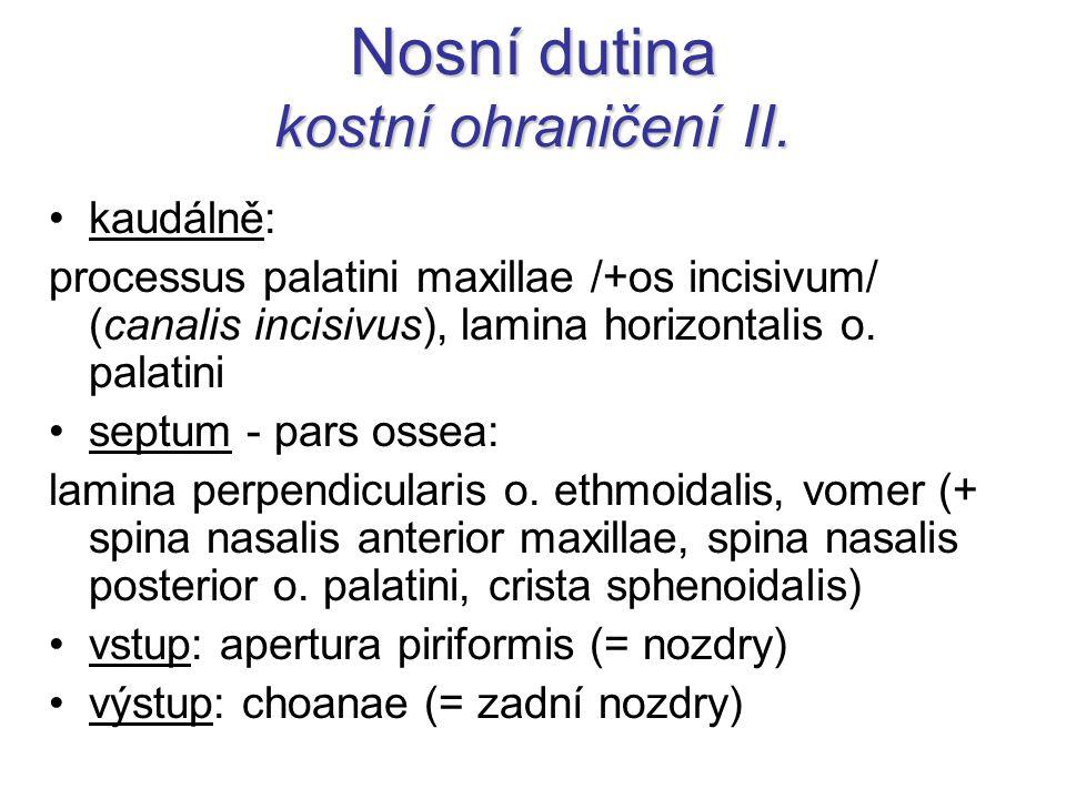 Nosní dutina kostní ohraničení II. kaudálně: processus palatini maxillae /+os incisivum/ (canalis incisivus), lamina horizontalis o. palatini septum -