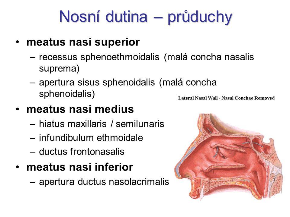 Nosní dutina – průduchy meatus nasi superior –recessus sphenoethmoidalis (malá concha nasalis suprema) –apertura sisus sphenoidalis (malá concha sphen