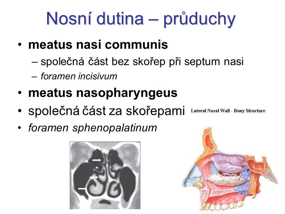 Nosní dutina – průduchy meatus nasi communis –společná část bez skořep při septum nasi –foramen incisivum meatus nasopharyngeus společná část za skoře