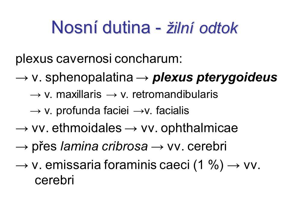 Nosní dutina - žilní odtok plexus cavernosi concharum: → v. sphenopalatina → plexus pterygoideus → v. maxillaris → v. retromandibularis → v. profunda