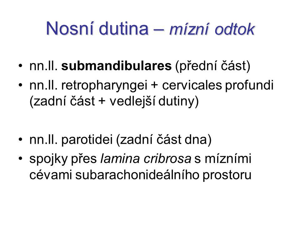 Nosní dutina – mízní odtok nn.ll. submandibulares (přední část) nn.ll. retropharyngei + cervicales profundi (zadní část + vedlejší dutiny) nn.ll. paro